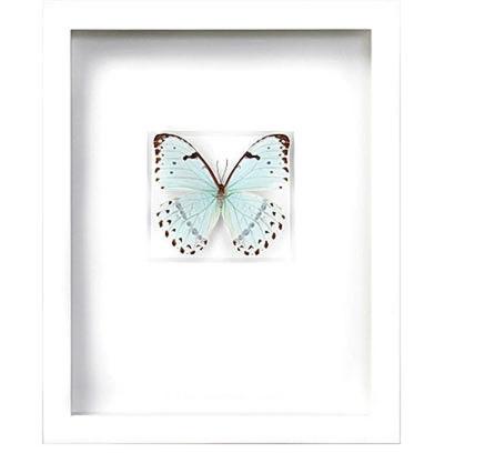 pheremone-butterfly.jpg